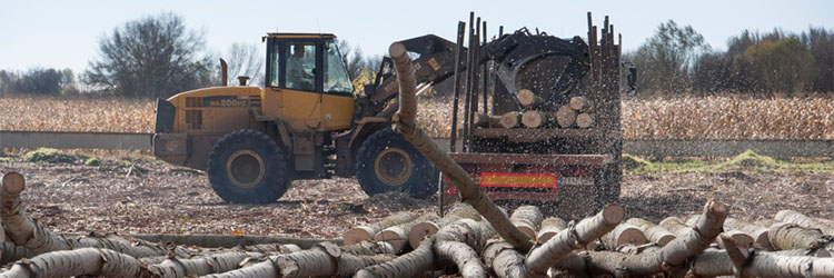 Subastas: La CHD adjudica en León 170.000 árboles por 9,57 millones de euros